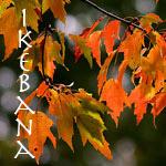 ikebana_150